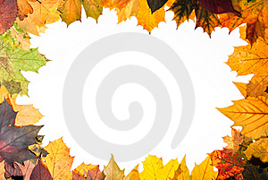 Colorful Autumn Leaves Royalty Free Stock Images - Image: 16525819