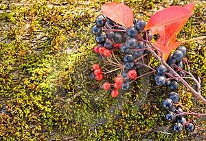 Autumn Background Stock Image - Image: 16532111