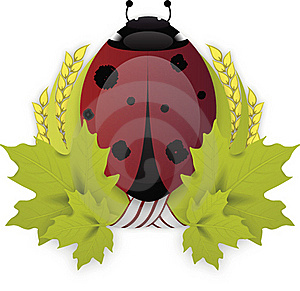 Laurel Wreath LadyBird Royalty Free Stock Image - Image: 16550746