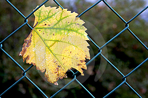 Leaves The Network Stock Image - Image: 16558191