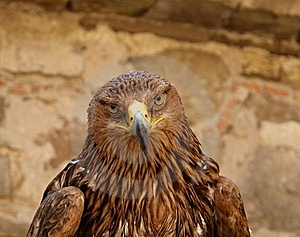 Sight Of An Eagle Stock Images - Image: 16562554