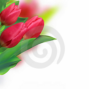 Spring Holiday Red Tulip. Stock Images - Image: 16563184