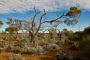 The Australian Landscape Stock Image - Image: 16574811