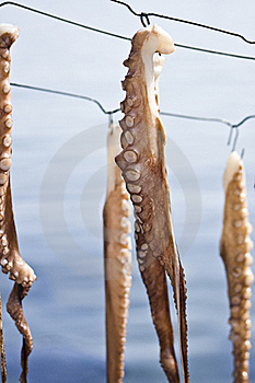 Octopus Set To Dry Stock Image - Image: 16575231