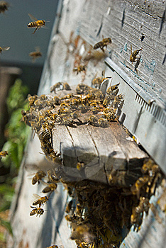 On A Visit On An Apiary Stock Photos - Image: 16578673
