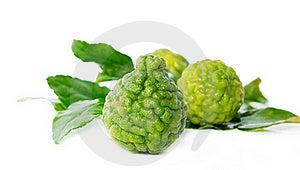 Fresh Green Lime. Kafir Stock Photo - Image: 16585650