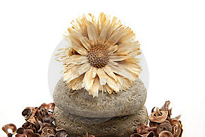 Dry Flower On Stone Stock Photos - Image: 16595383