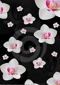 Background With White Orchid Flowers Stock Images - Image: 16606324