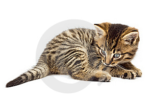 Funny Kitten Isolate In White Royalty Free Stock Photos - Image: 16629608