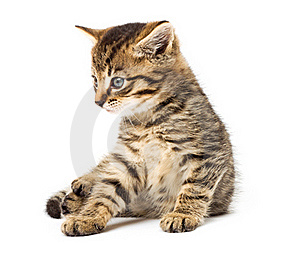 Funny Kitten Isolate In White Royalty Free Stock Photos - Image: 16629618