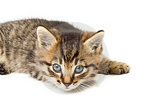 Funny Kitten Isolate In White Royalty Free Stock Photos - Image: 16629638