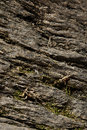Camouflage. Royalty Free Stock Photos