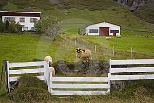 Sheep Farm Royalty Free Stock Photos - Image: 16632048