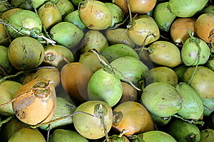 Fresh Green Coconuts Stock Photo - Image: 16635610