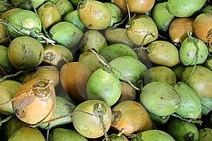 Fresh Green Coconuts Stock Photo - Image: 16635610