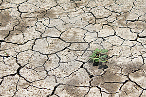 Barren Land At Summer Stock Photo - Image: 16637600