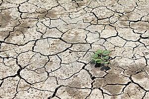 Barren Land At Summer Stock Photo - Image: 16637600