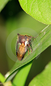 Tree Hopper Royalty Free Stock Images - Image: 16638329