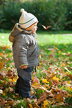 Kid In Autumn Wood Stock Image - Image: 16643211