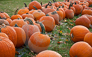 Pumpkin Patch Stock Photos - Image: 16643583