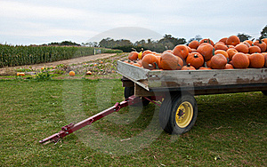 Pumpkin Tow Stock Photo - Image: 16643600
