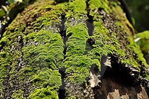 Green Fern On The Rotten Bark Stock Photos - Image: 16651573