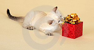 Kitten With Gift. Stock Image - Image: 16652181