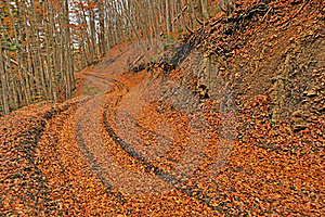 Orange Autumn Path Through Forest Royalty Free Stock Photography - Image: 16652207