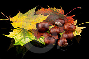 Autumn Composition Royalty Free Stock Photography - Image: 16652617