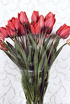 Red Tulips Stock Photography - Image: 16671672