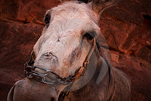 Donkey Face Stock Images - Image: 16694564