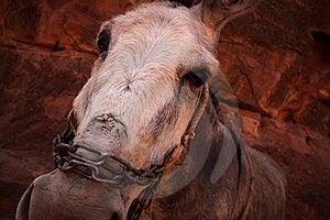 Donkey Face Stock Images - Image: 16694564