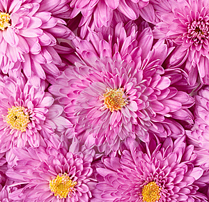 Background Of The Flowers Royalty Free Stock Image - Image: 16697086