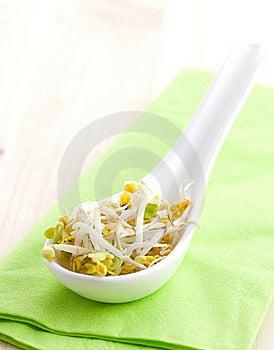 Fresh Radish Sprouts Stock Photos - Image: 16699053