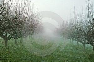 Misty Garden Stock Image - Image: 1672621