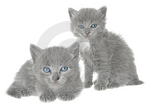 Kittens. Royalty Free Stock Photos - Image: 16701038