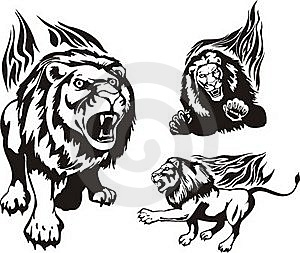 Flaming Big Cats. Stock Image - Image: 16714621