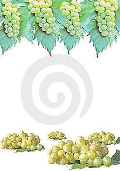 Grape On White Background Royalty Free Stock Photography - Image: 16714797