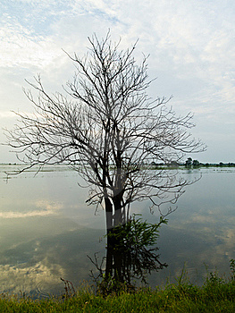 Dead Tree In Flood Royalty Free Stock Photo - Image: 16718455