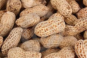 Peanut Royalty Free Stock Photography - Image: 16720867