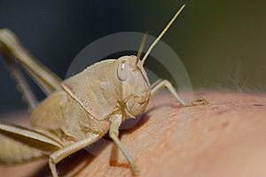 Cricket Royalty Free Stock Photos - Image: 16726428