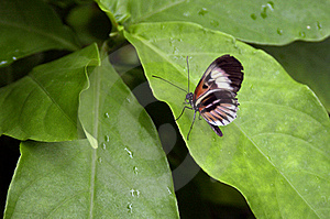 Butterfly Royalty Free Stock Photos - Image: 16737788