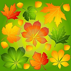 Autumnal Leaves. Stock Photos - Image: 16740773