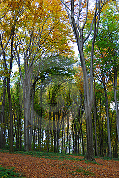 Autumn Forest Path Stock Photos - Image: 16740883