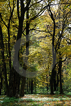 Autumn Forest Path Royalty Free Stock Photography - Image: 16741007