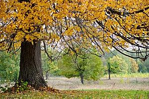 Autumn Stock Image - Image: 16741201