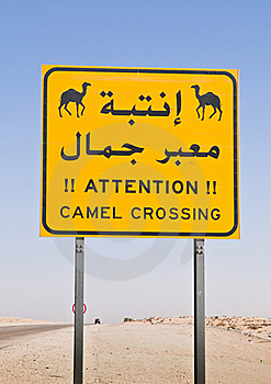 Camel Crossing Royalty Free Stock Photo - Image: 16742795