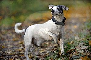 Doggy Stock Photography - Image: 16745832