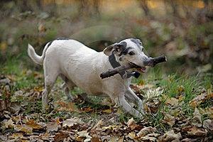 Doggy Royalty Free Stock Photography - Image: 16745917