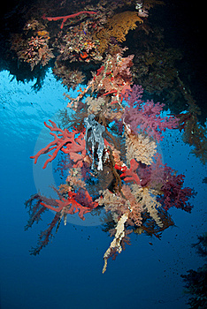 Vibrant Tropical Coral Reef Scene. Royalty Free Stock Image - Image: 16749666